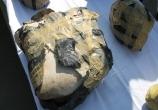 محموله 114 کیلویی مواد افیونی در یزد زمینگیر شد